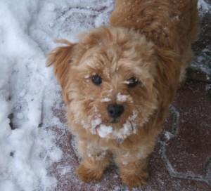 Milka, the office dog.